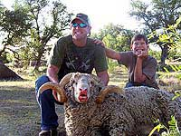 Merino Ram Hunt in Texas