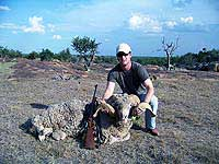 Texas Hunting for a Merino