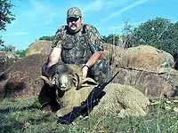 Merino Ram Hunts in th Rocky Mountains of Texas