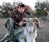 hunting a texas dall ram in the rolling hills of mason county