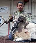 Hunting Corsican Rams at the wildlife ranch