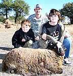 Hunting exotic rams in the texas hill country