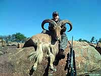 Gold Medal, Record Aoudad Hunting at The Wildlife Ranch in Mason Texas the Center of the Texas Hill Country