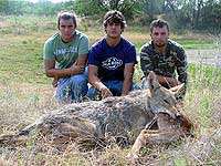 Texas Coyote Hunting