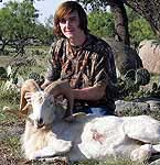 Texas Dall Exotic ram hunts in the backyard of Mason, Texas