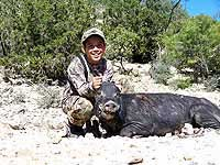 Boar Hog Hunts at The Wildlife Ranch in South Texas