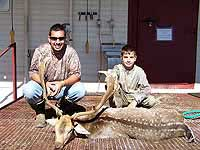 Fallow Deer Hunts in the Center of texas at a Hunting Ranch that offers hunts for several species