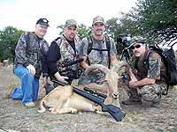 Tough Trophy Aoudad Hunts with a crew of many