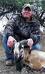 Corsican Ram Hunts in the mesquite brush of south texas
