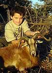 Corsican ram hunts in the texas hill country