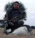 Hunting Blackbuck Antelope in the texas hill country