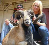 affordable hunt for corsican rams in Mason, TX