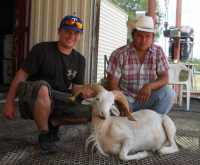 nice texas dall ram taken at the wildlife ranch mason texas