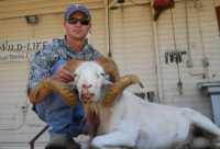 scoring for ROE is a texas dall ram