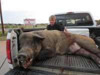 huge wild boar youth hunt at Mason The Wildlife Ranch
