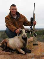 corsican ram call for pricing!