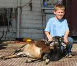 corsican ram youth rifle brush country
