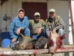 group hog hunt wild