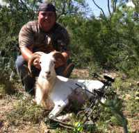 texas dall affordable exotic ram hunt