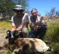 military hunt for four horn sheep in hill country