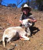 youth texas dall white sheep