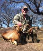 corsican ram call for pricing