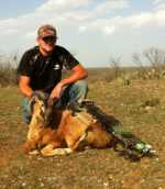 corsican ram hunt call for pricing!