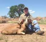 Corsican ram hill country hunt