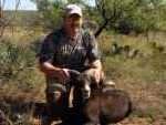 black hawaiian ram hunting in Texas