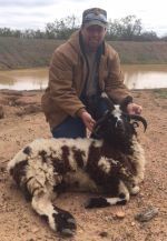 four horn ram hunt call for pricing