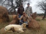 white fallow hunt hill country