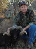 trophy black hawaiian ram rugged hill country