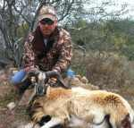 Corsican ram hunt hill country brush