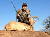 hunt for aoudad in the rugged hill country of mason county