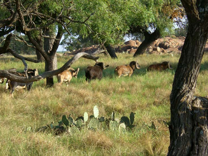 Trophy hunting in texas at the wildlife ranch in the texas for Deer scenery